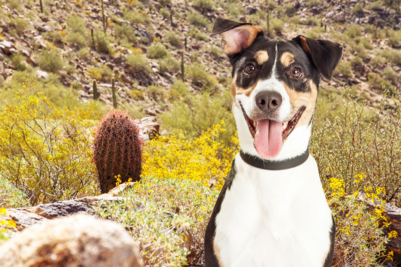 Dog friendly hotel sedona arizona